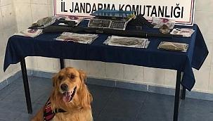 Çankırı İl Jandarma Komutanlığı Şüphelilere Göz Açtırmıyor