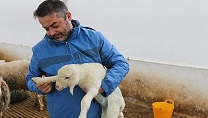 Genç Mühendis Koyun Sütü Üretiminde Bölgenin En modern Tesisini Kurdu