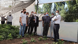Vali Abdullah Ayaz Sebze Üretimi Yapan Seralarda İncelemelerde Bulundu