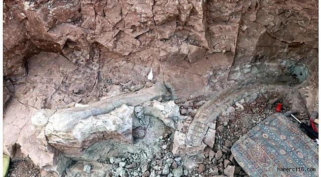 """Çankırı'daki Çorak Yerler Omurgalı Fosil Lokalitesi""""nde Yürütülen Kazı Çalışmaları"""