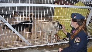 Çankırı İl Jandarma Komutanlığı 4 Ekim Hayvanları Koruma Günü Faaliyeti