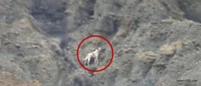 Çankırı'da Kanyonda Mahsur Kalan Köpeği Kurtarmak İçin Çözüm Yolları Aranıyor